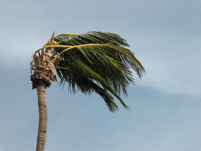 image of palm tree blowing in a storm